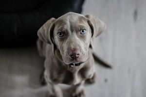 karma dla psa Purina - Merdam.pl