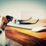 Opieka nad psem – najlepsze karmy dla psów